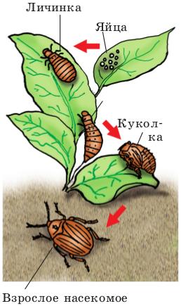 Инсектицид Престиж от колорадского жука